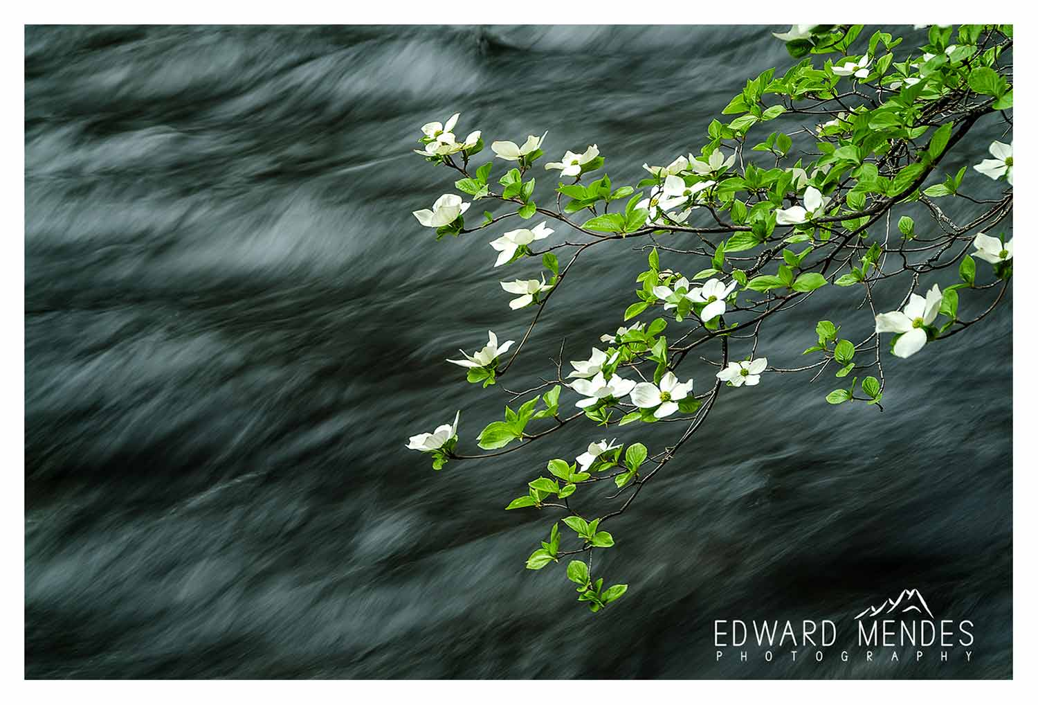 4504_Merced-River-and-Dogwoods_WATERMARKED Image Licensing and Publication