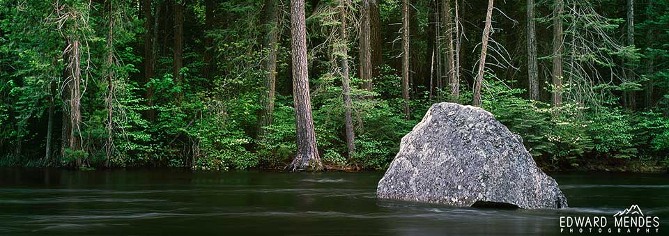 spring_solitude_yosemite_national_park_merced_river_dogwoods_Homepage Homepage